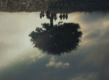 an upside down tree